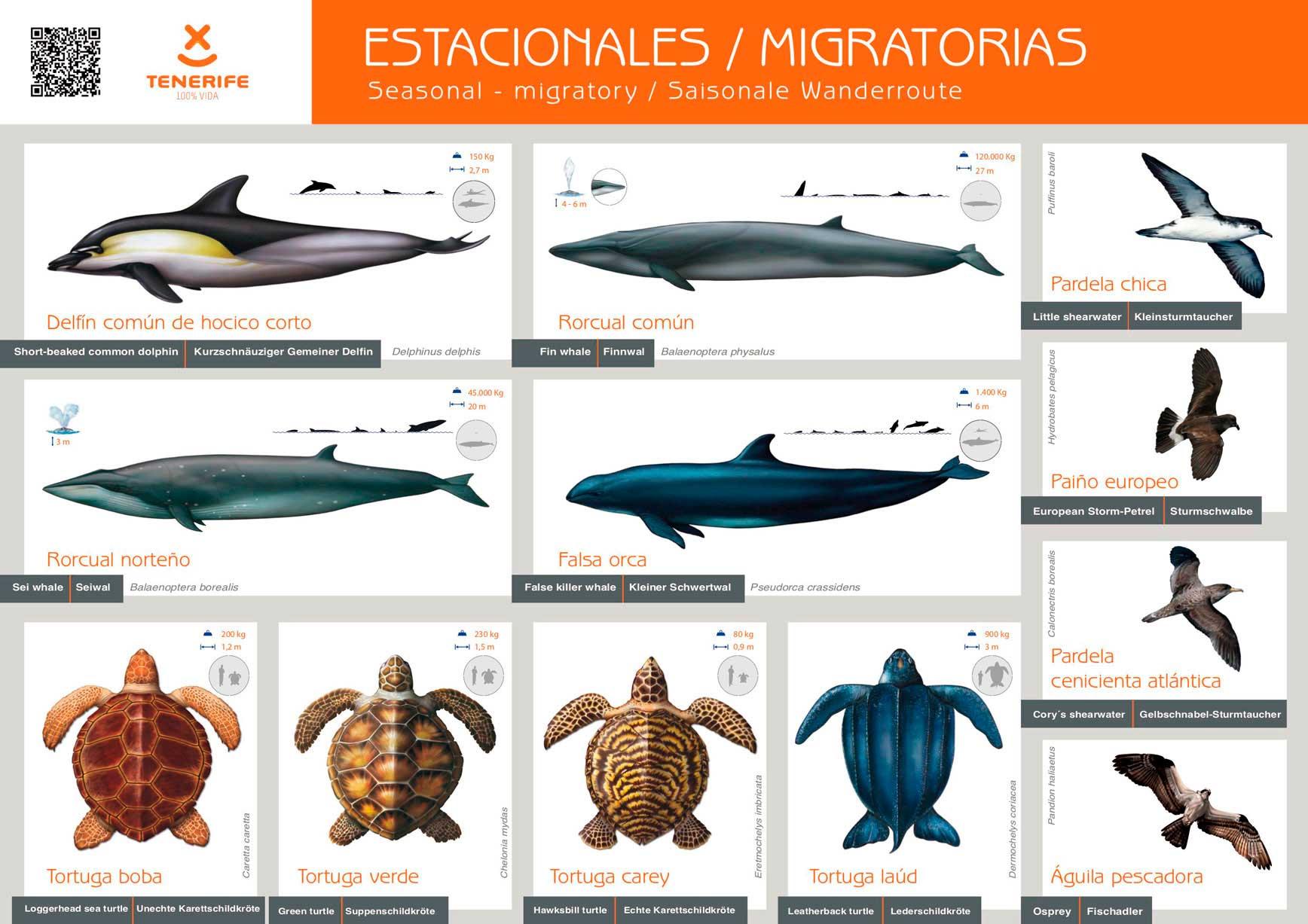Big Smile Charters · Avistamiento de cetáceos en el sur de Tenerife. Excursiones en barco en Tenerife. Excusiones a Masca. Excursiones a La Gomera. Charters privados en barco. Excursiones sostenibles. Avistamiento de ballenas Tenerife. Avistamiento de delfines en Tenerife. Fauna marina en Tenerife.